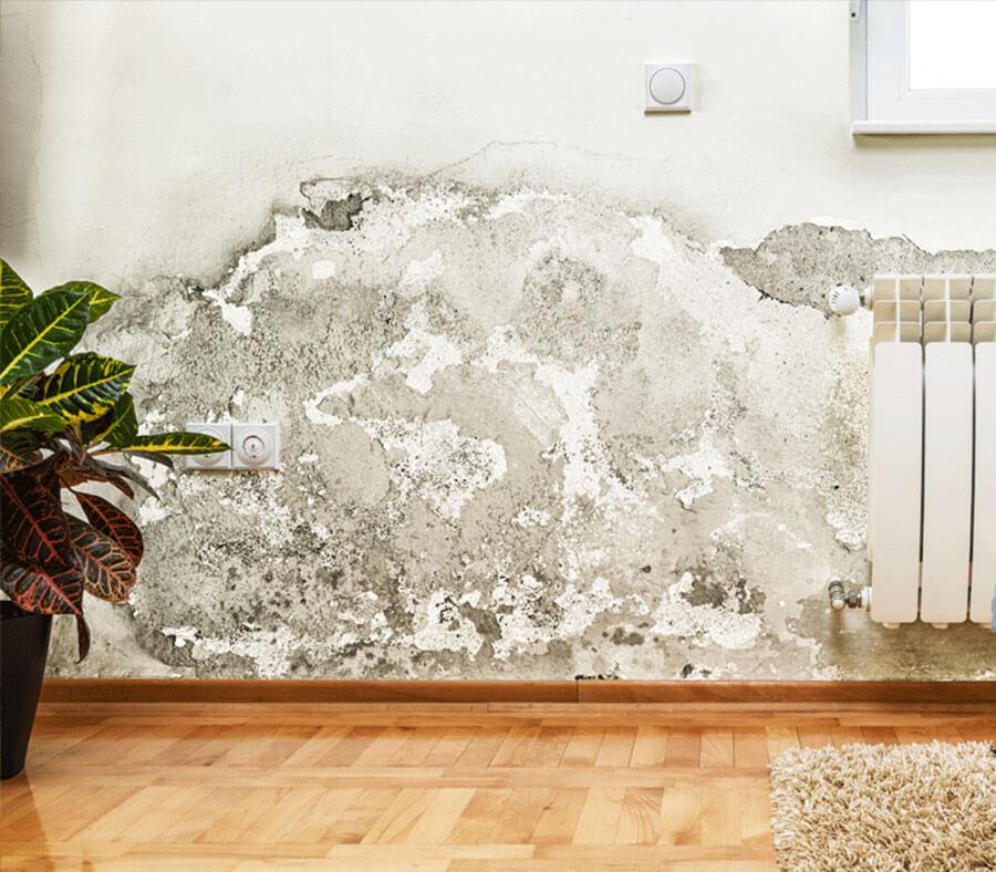enduit anti humidit h200 o 39 dassia. Black Bedroom Furniture Sets. Home Design Ideas